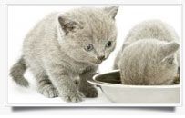cat-feeding-services mosman
