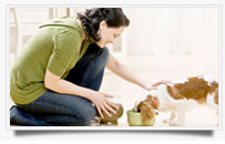 pet fedding-services mosman and manly