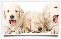 puppy-schools mosman and balmoral