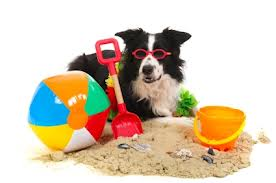 Casual & Holiday Pet Walking Services